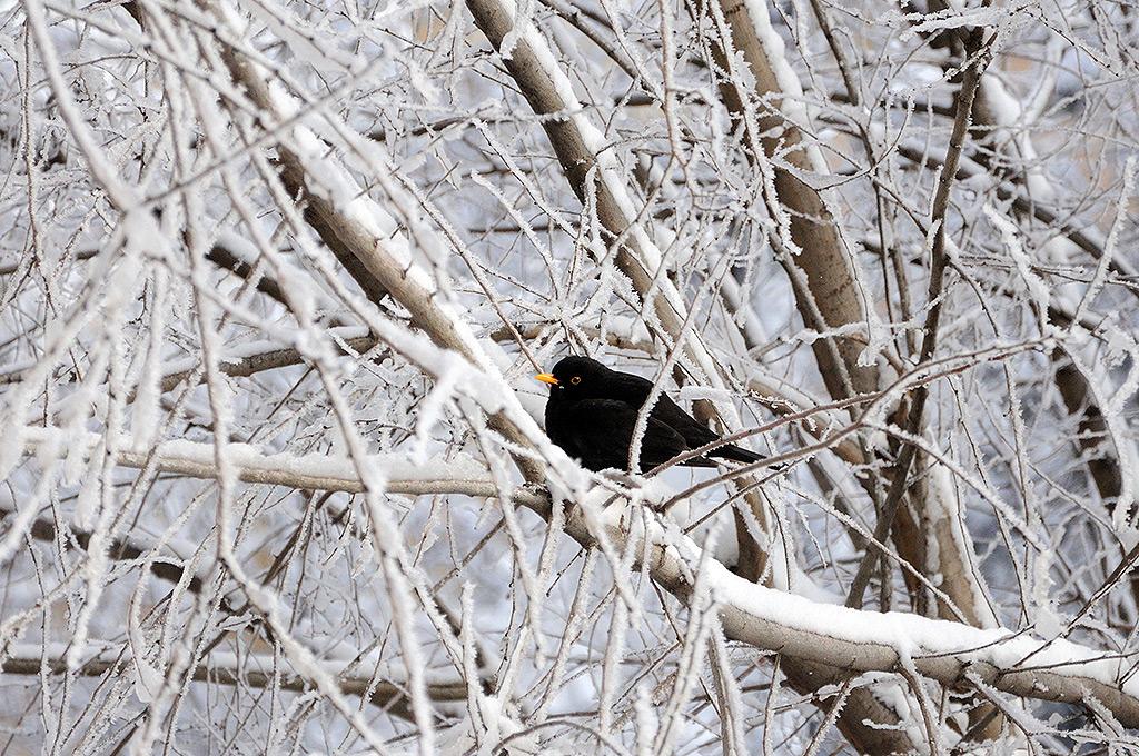 pasaroiul-singuratic-iarna-bucuresti