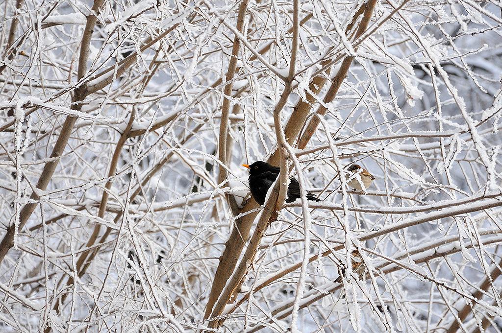 prieteni-pasaroi-iarna_bucuresti